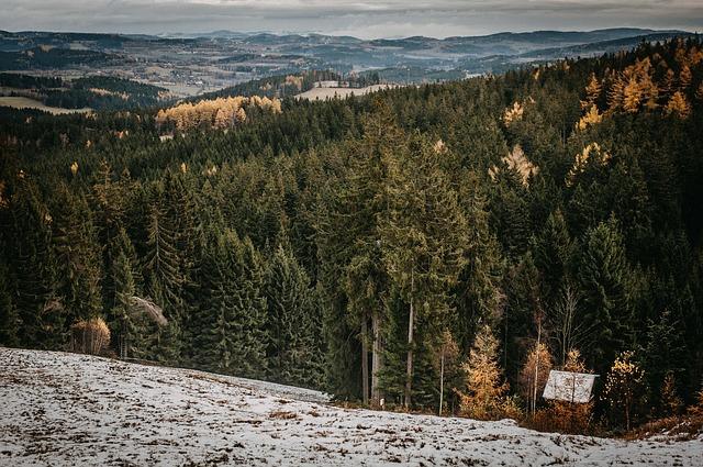 chatička v lese