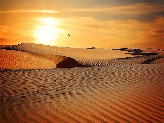 pták na poušti